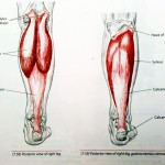calf muscle stretches to improve snowboarding